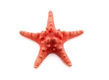 asteroidea红海星形海星白色 库存照片