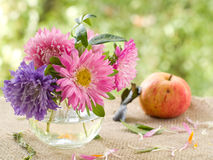 Asters Royalty Free Stock Photo