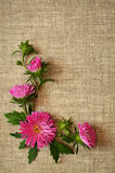 Asters arrangement in a corner Stock Images