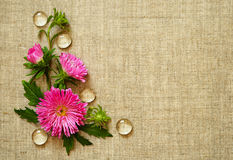 Asters arrangement in a corner Royalty Free Stock Images