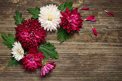 Asters arrangement on wooden background Royalty Free Stock Photos