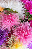 Asters background Stock Photography