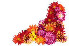 Asters border. Royalty Free Stock Images