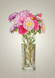 Asters bouquet. Beautiful flowers in vase isolated