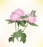 Asters and butterfly Royalty Free Stock Image