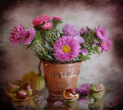 Asters and chestnuts Stock Photography