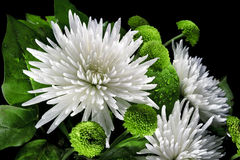 Asters and chrysanthemums Stock Images