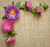 Asters composition on canvas background. Asters composition on gray canvas background Royalty Free Stock Photo