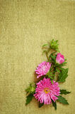 Asters composition Stock Image