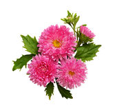 Asters composition Stock Images