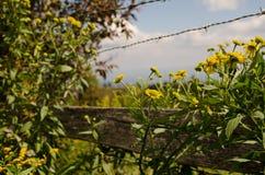 Asters et barrière jaunes photographie stock libre de droits