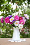 Asters flowers Royalty Free Stock Photo
