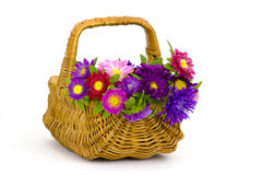 asters flowers in a basket Stock Photo
