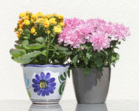 Asters and Kalanchoe Flowers Royalty Free Stock Photos