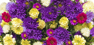 Asters and marigolds. Stock Photos