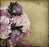 Asters on old background Stock Image