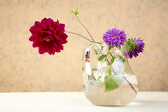 Asters and  peony in  glass jug Royalty Free Stock Photos