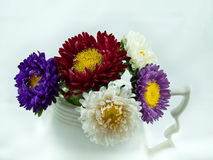 Asters in a pot. Colorful asters in a white pot Royalty Free Stock Image