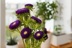 Asters pourpres dans un vase sur un rebord de fenêtre Image stock