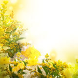 Asters, un fond de fleur Photo libre de droits