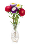 Asters in vase Stock Images