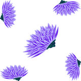 Asters on a white background Royalty Free Stock Image