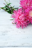 Asters on white boards Stock Photography