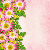 Asters and wild flowers arrangement Stock Photography