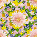 Asters and wild flowers background Royalty Free Stock Image