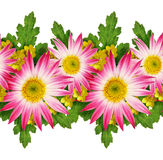 Asters and wild flowers pattern Stock Image
