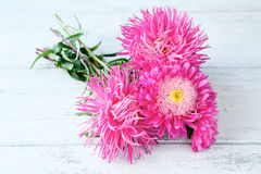Asters on wooden boards Royalty Free Stock Photography