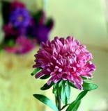Asteru kwiat Obraz Royalty Free