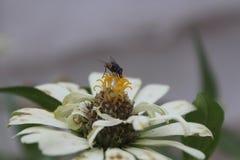 Asteru, stokrotki, słonecznika, Asteraceae lub Compositae kwiaty, latają obrazy royalty free