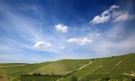Astigiano,山麓,意大利:风景在夏天 免版税库存照片