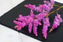 Astilbe cut flower Stock Image