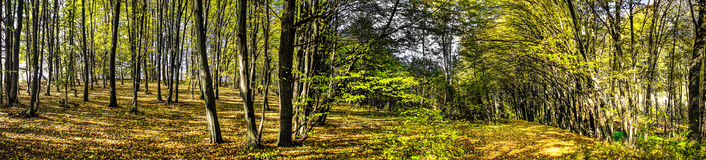 Astonishing forest by autumn. Wonderful view. Nice panorama wood by autumn Stock Photos