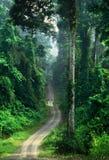 Astonishing rainforest of Borneo Royalty Free Stock Images