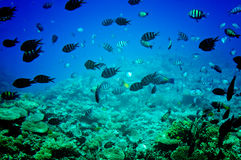 Astonishing undersea world of Red sea. Royalty Free Stock Images