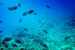 Astonishing undersea world of Red Sea. Stock Image