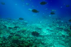 Astonishing undersea world of Red sea. Stock Photo