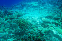 Astonishing undersea world of Red Sea. Stock Images