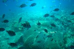 Astonishing undersea world of Red sea. Royalty Free Stock Photography