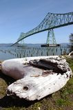 The Astoria bridge & a log. Royalty Free Stock Photo