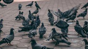 Astrakan, Rusland - Juni 06, 2019: Stedelijke vogels in het park De duiven eten voer De tekeningen van kinderen op asfalt stock foto's