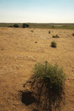 Astrakhan steppe. Astrakhan steppe in summer heat Royalty Free Stock Photos