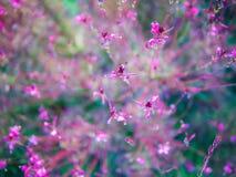 Astrazione con i fiori rosa Fotografia Stock