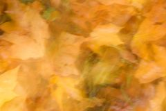 Astrazione d'autunno Fotografia Stock