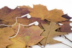 Astrazione di autunno di musica fotografia stock