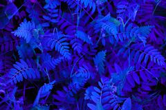 Astrazione di colore al neon blu fotografia stock libera da diritti