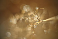 Astrazione marrone delle gocce di acqua di Defocussed fotografia stock